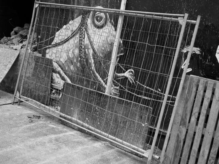 Phlegm Frog Sheffield 30.3.13