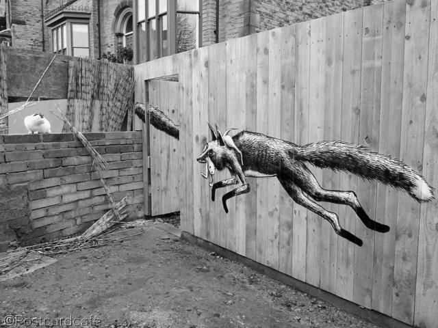 4. Urban Foxes - Phlegm - Sheffield 2013