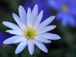 1. Flowers of Romance