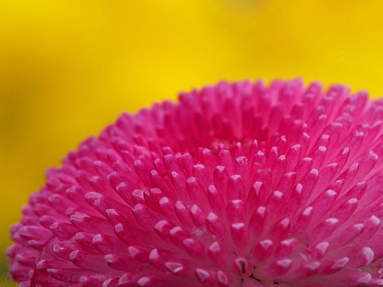 Flowers of Romance No.5