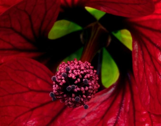 Flowers of Romance No.3