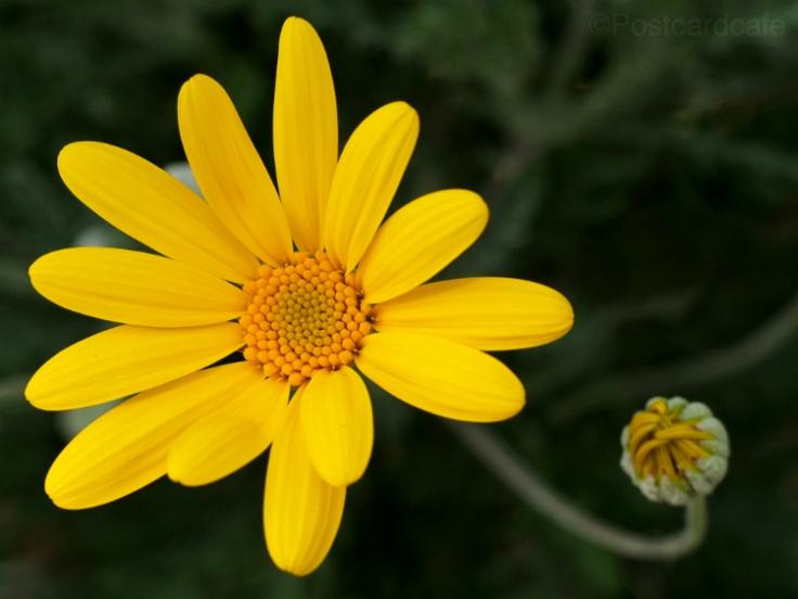 Yellow 03052013