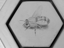 5. Silverpoint Drawing by Nick Hunter - Sheffield