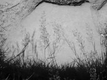 12. Grasses - Summer 2014