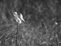 9. Grasses - Summer 2014