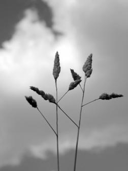 7. Grasses - Summer 2014