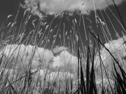 6. Grasses - Summer 2014