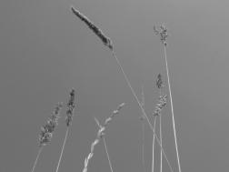 5. Grasses - Summer 2014