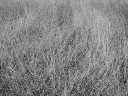 2. Grasses - Summer 2014