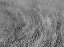 1. Grasses - Summer 2014