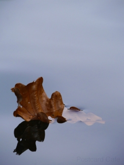 7. Time of The Season - 2014 - Autumn Leaves