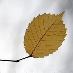 7. When I Fall, I'll Fall For You - Sheffield November 2014