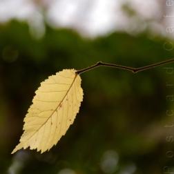 4. When I Fall, I'll Fall For You - Sheffield November 2014