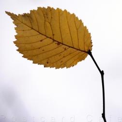 3. When I Fall, I'll Fall For You - Sheffield November 2014