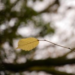 6. When I Fall, I'll Fall For You - Sheffield November 2014