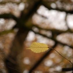8. When I Fall, I'll Fall For You - Sheffield November 2014