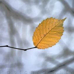 1. When I Fall, I'll Fall For You - Sheffield November 2014