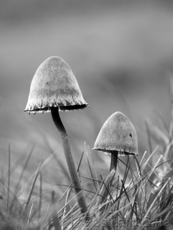 2. Fungi Friday - November 2014