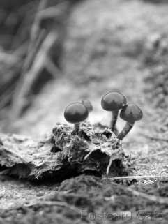 4. Fungi Friday - November 2014