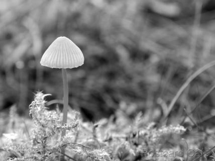 1. Fungi Friday - November 2014