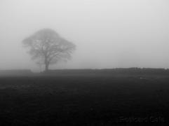 7. November Morning - Sheffield 2014