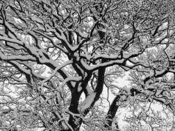 3. Snowfall - Sheffield - January 21 2015