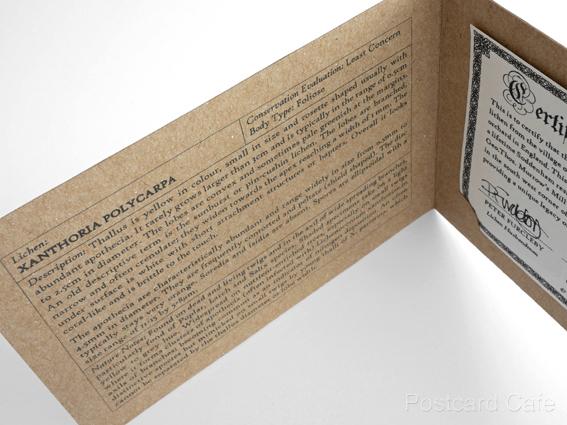 11. Soddenham - Limited Edition Authorised Artifact