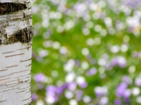 1. Spring Flowers - Sheffield - 2015