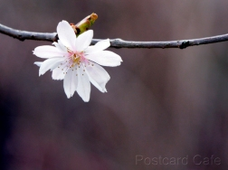 4. Spring Flowers - Sheffield - 2015