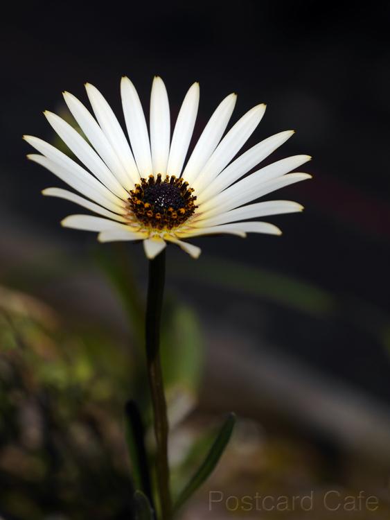 Spring Flower - 2015