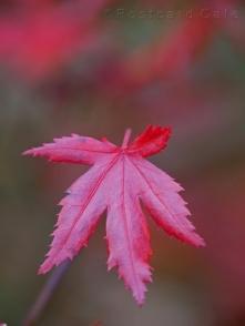 2. Autumn 2016 | Sheffield | © Postcard Cafe (sp1000655)