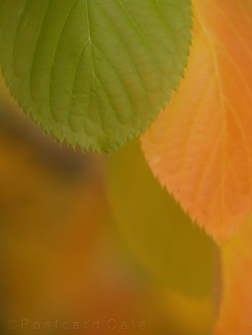4. Autumn 2016 | Sheffield | © Postcard Cafe (sp1000674)