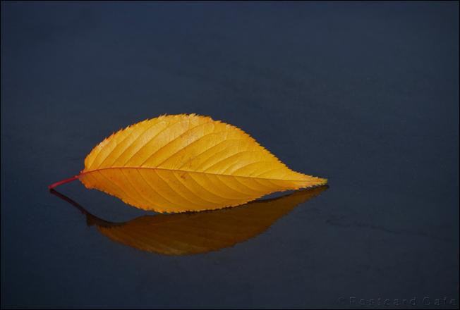 Leaf on bench | Sheaf Square Sheffield | © Postcard Cafe  | SP1030869E