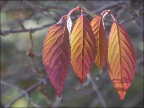 5. 2010 – 2020 Retrospective | Nature Vol. 2 | Autumn Leaves November 2017