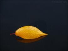 6. 2010 – 2020 Retrospective | Nature Vol. 2 | Autumn Leaf November 2017