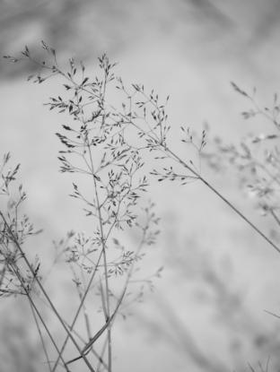 13. 2010 – 2020 Retrospective | Nature Vol. 2 | Grass | July 2014